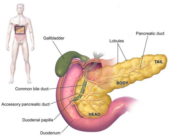 Pancreas Yo