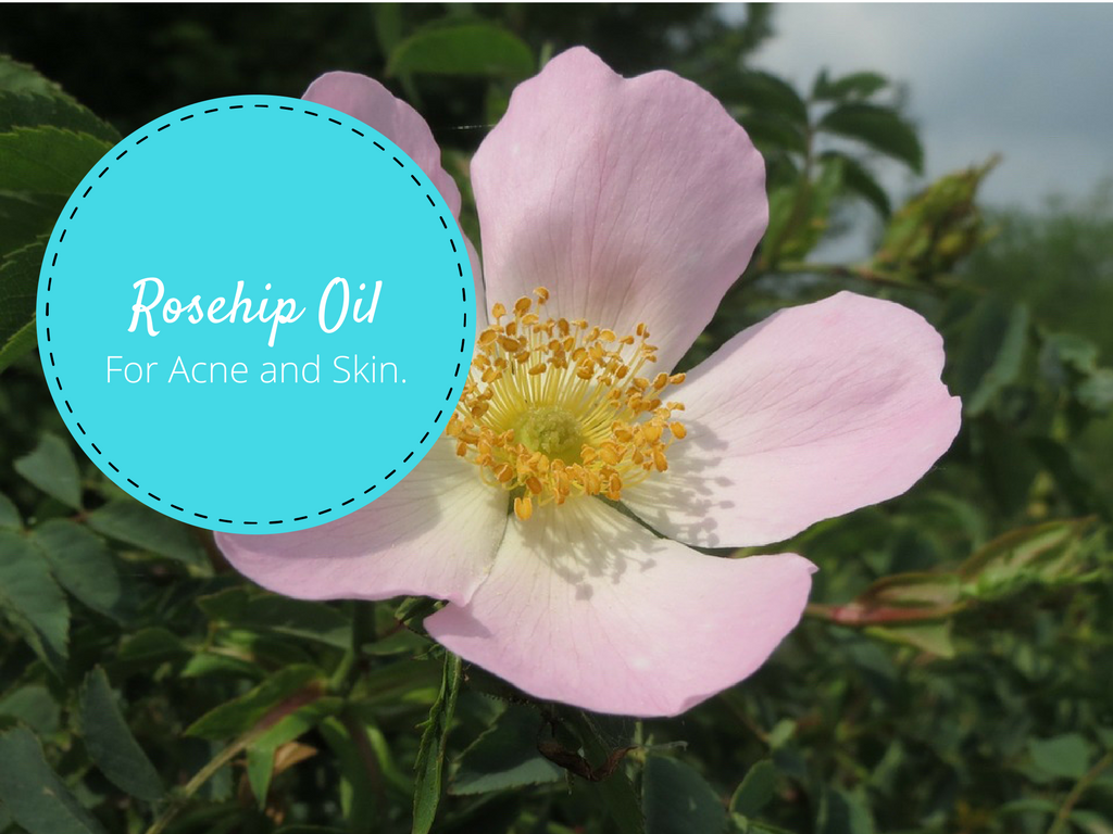 Rosehip Oil For Acne and Skin Explained (7 Studies): Everything You